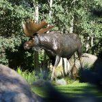 """Bull of the Woods9'6""""L 7'H 2'W - ed./6Bull Moose Monument"""