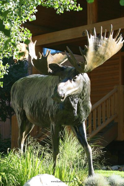 "Bull of the Woods96""L 7H 2W - ed./6 - Wildlife Bronze Sculpture Monumental Wildlife Bronzes Life-size plus wildlife bronzes"